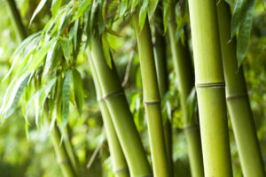 unusual tips for skin and hair bamboo